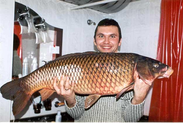 рыба сазан. фото